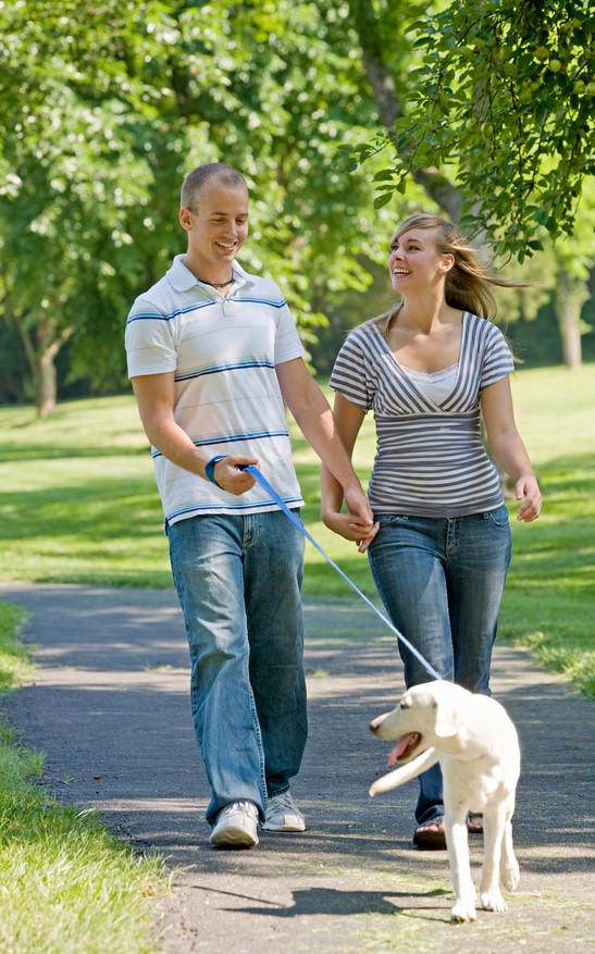 Services and Rates Professional Pet Sitter Service