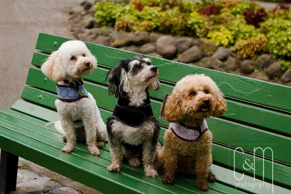 Services and Rates Professional Pet Sitter