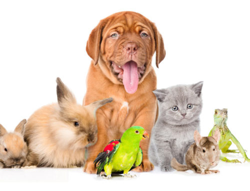 Be Prepared For Your Pet Sitter – 5 Things You Can Do
